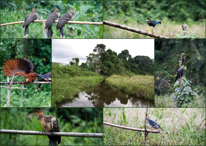 Национальный парк Ману, Manu National Park