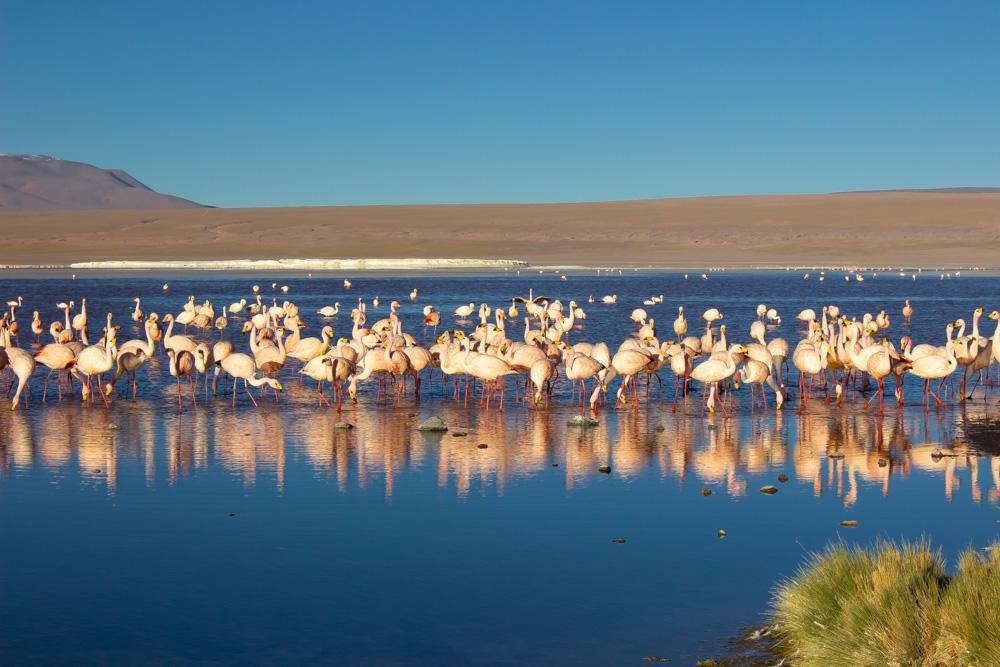 Заповедник Авароа, цветная лагуна с фламинго, Боливия