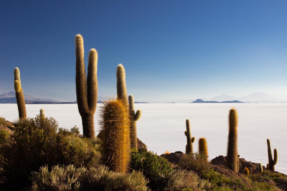 Солончак Уюни, Боливия. Остров Кактусов