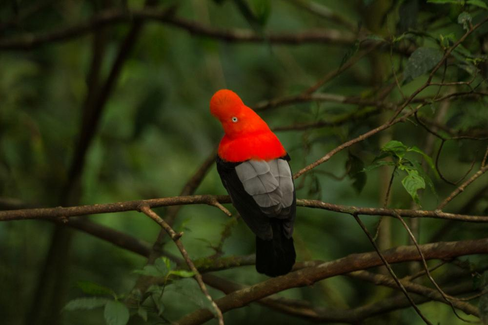Tour from Cusco to the Amazon jungle. Manu National Park, 4 days