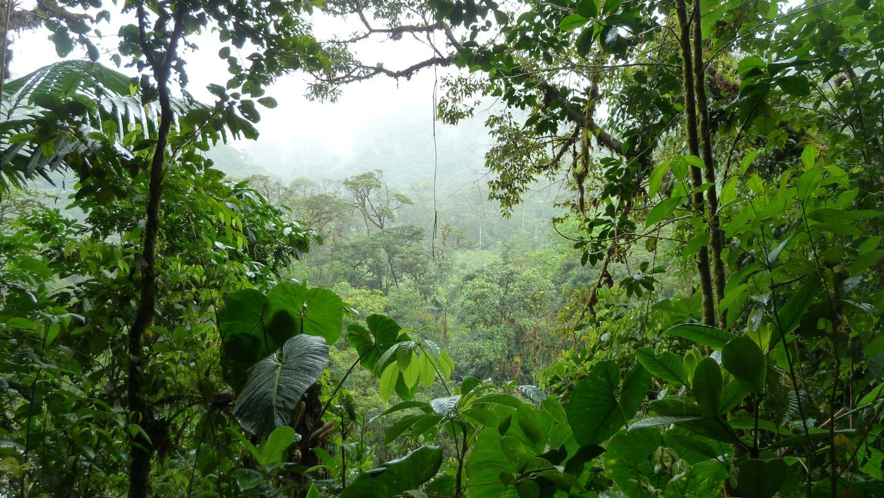 Esoteric Tour: Amazon rainforest and Ayahuasca ceremony, 4 days