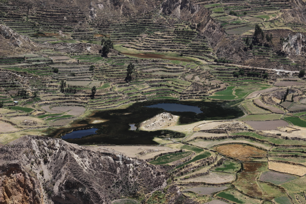 Tour to Colca Canyon from Puno with transfer to Arequipa, 3 days