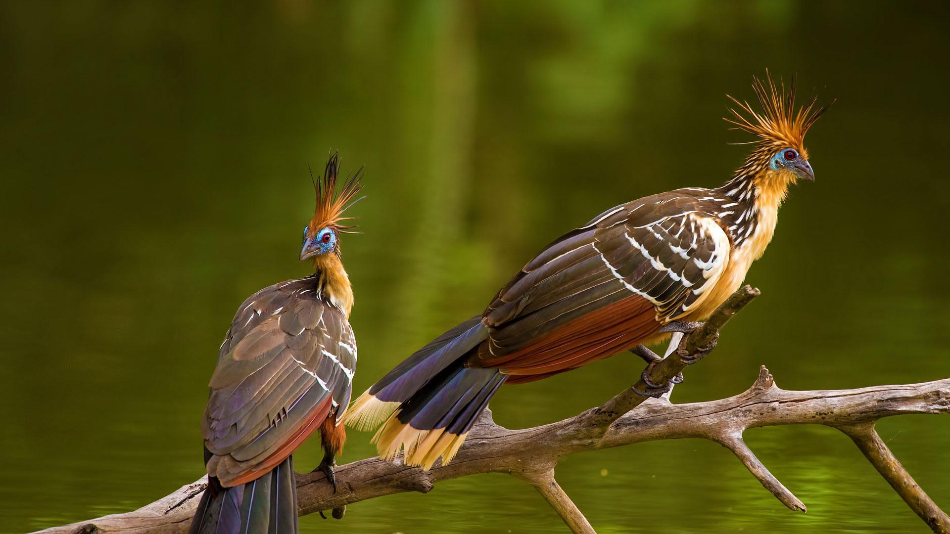Amazon Rainforest Peru, Manu National Park