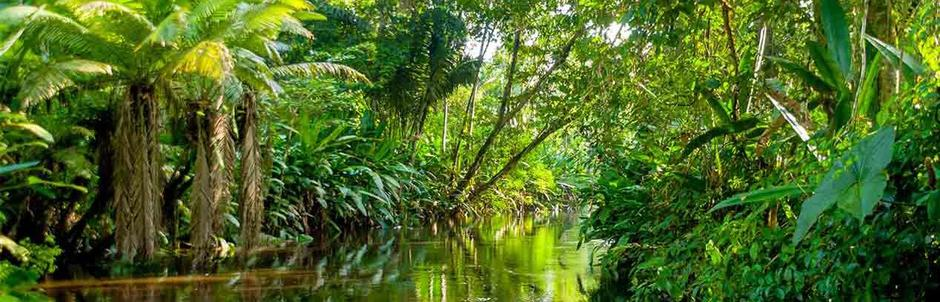 Amazon Jungle tour, Iquitos, 2 days in Heliconia Lodge