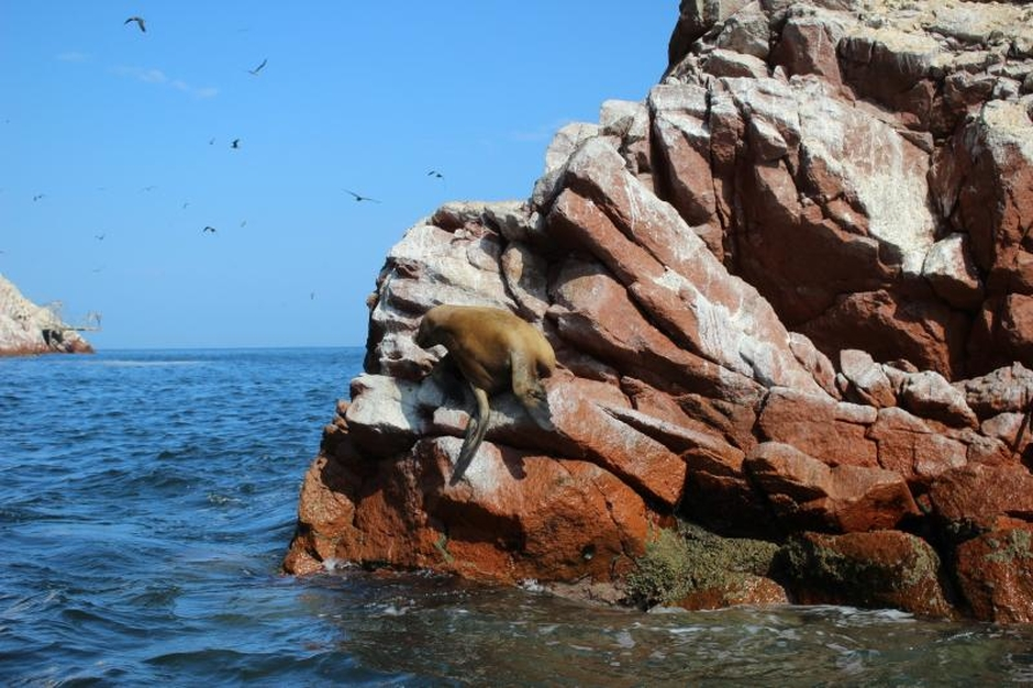 Paracas National Reserve and Ballestas Islands