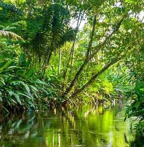 Amazon Jungle tour from Iquitos, 3 days in Heliconia Lodge